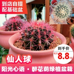 绿植盆栽-仙人球-醉花荫园艺中心