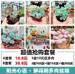 多肉植物-超值抢购套餐-醉花荫园艺中心